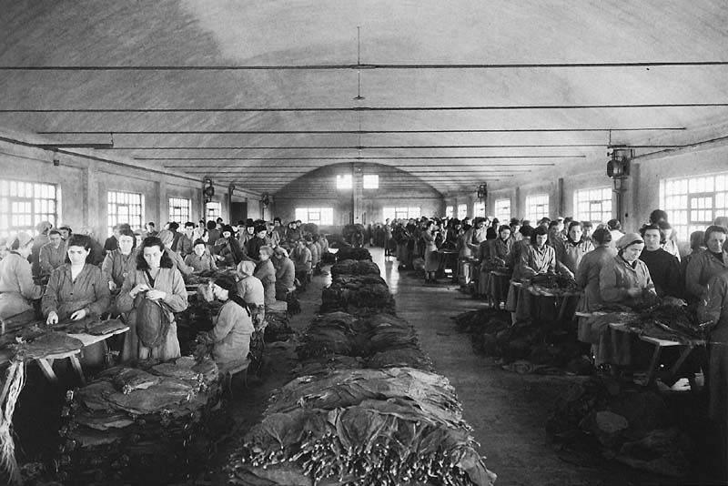 Lavoratrici in una manifattura di tabacchi.