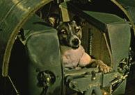 La cagnetta Laika a bordo dello Sputnik 2.